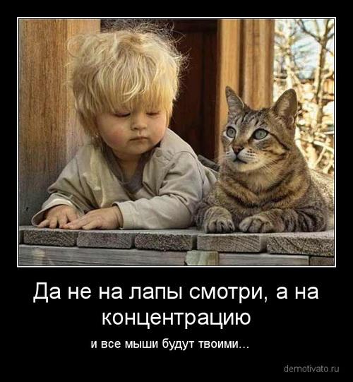 Демотиваторы про собак и котов
